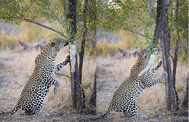 python-devours-on-impala-56aee74bbdf2a_l